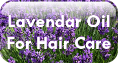 Learn about lavender essential oil for hair care