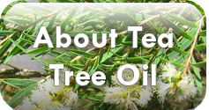 Learn about Tea Tree Oil, Essential Oil