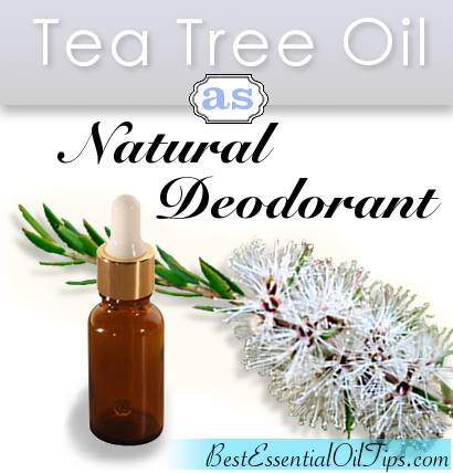 Tea Tree Oil as Natural Deodorant Article on Best Essential Oil Tips